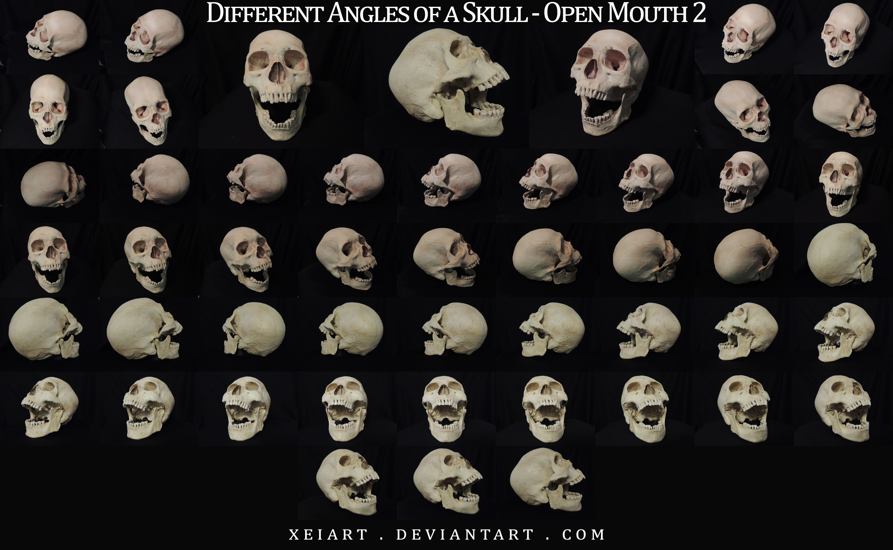 different angles of a skull open mouth redone by