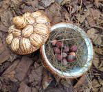 My nuts wealth by EEKINT
