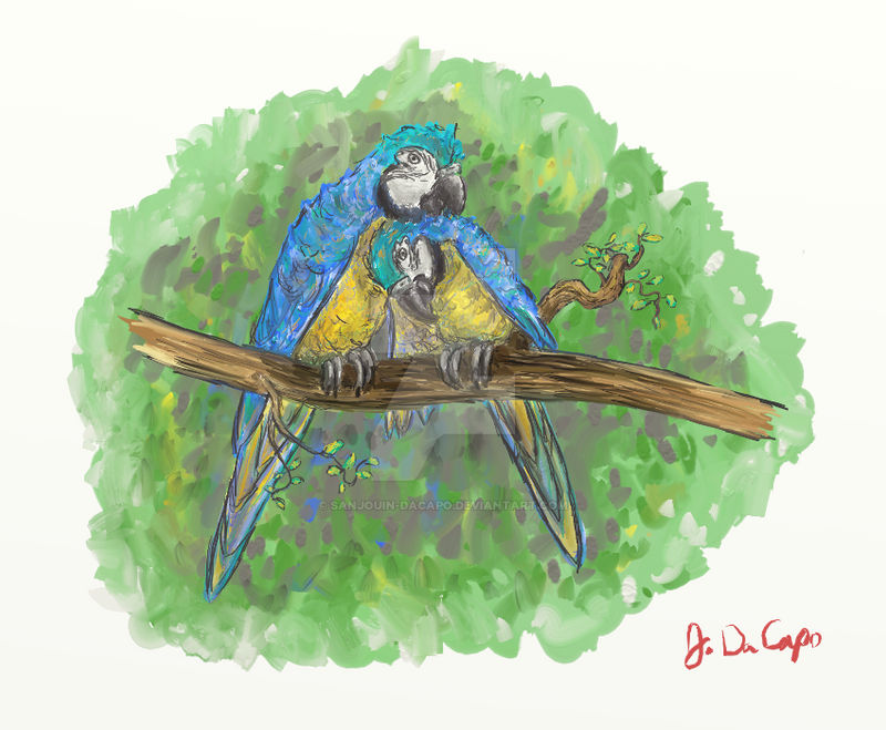 Blue And Gold Macaws In Love