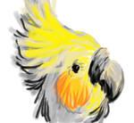 Pretty Cockatiel by sanjouin-dacapo
