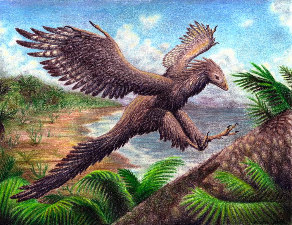 "Relatos ""dados la vuelta"" - Página 2 Archaeopteryx___Landing_by_Ferahgo_the_Assassin"