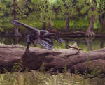 Anchiornis - new version