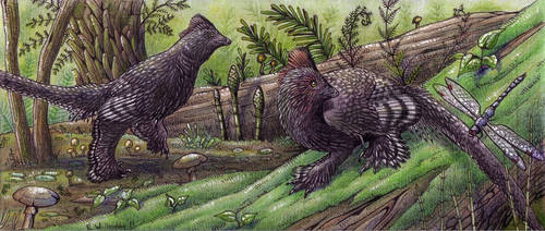 Anchiornis: sexual dimorphism by EWilloughby