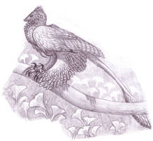 Microraptor by EWilloughby