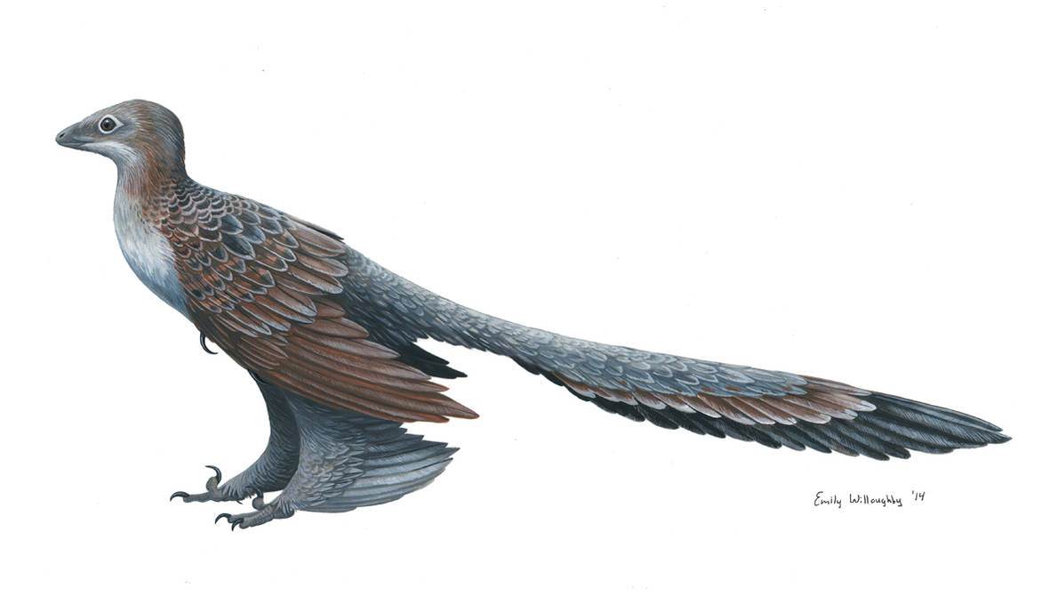 Changyuraptor by EWilloughby