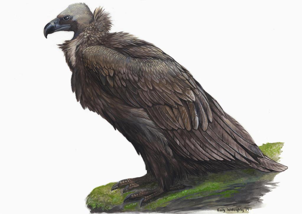 Black Vulture Painting