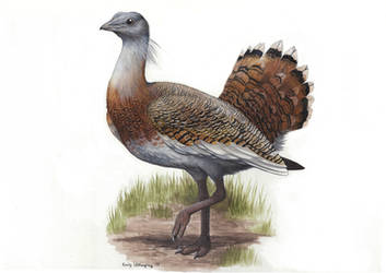 Great Bustard by EWilloughby