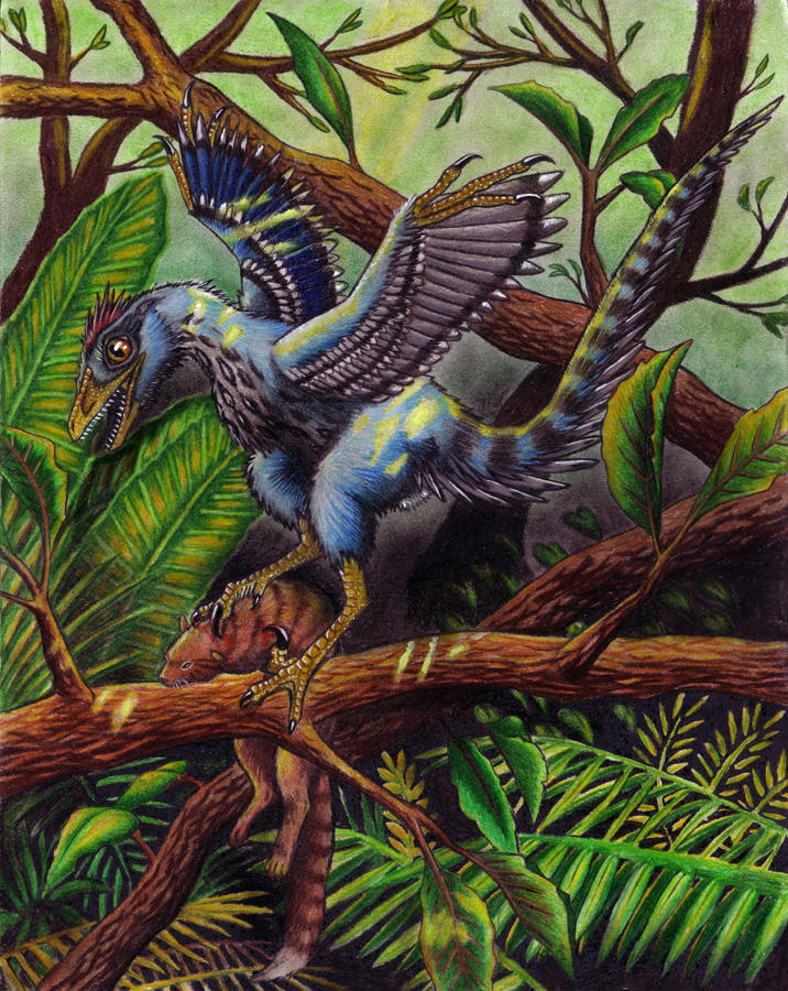 Sinornithosaurus Juvenile by EWilloughby