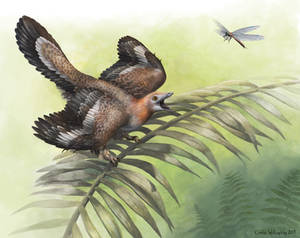 An appetizer for Archaeopteryx