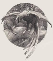 Ambopteryx Incoming