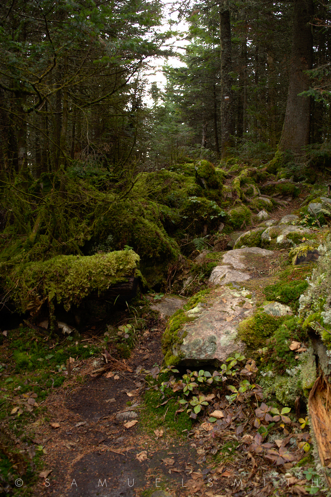 Mountian Moss by Cloud-Dragonz