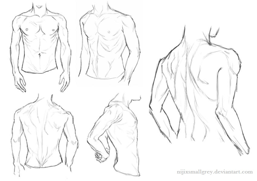Male Anatomy Study by Nijicx on DeviantArt
