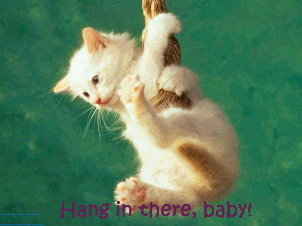 Hang in there baby by geliroll on deviantart