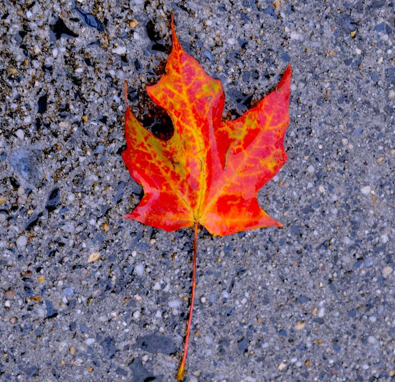Autumn Leaf by IWilsonArt