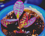 Colorful plant by IWilsonArt