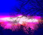 sunrise through branches