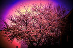 Colorful spring blossom tree