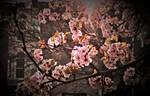 Sunny blossoms