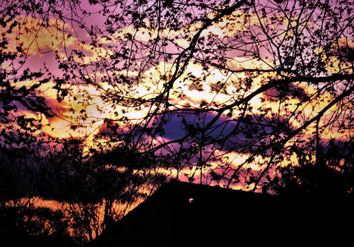 sunrise branches