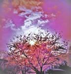 Sunny blossom sunset