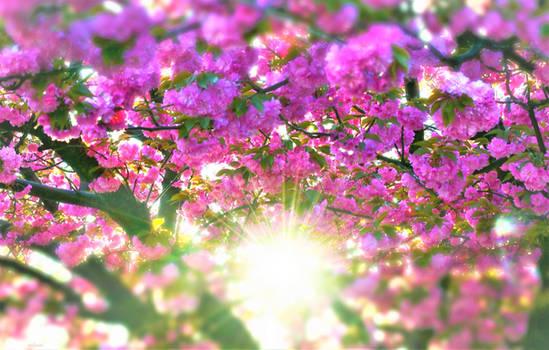 Spring sunshine blossoms