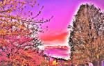 Blossom tree sunset