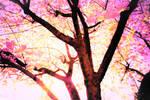 Spring tree sunlight