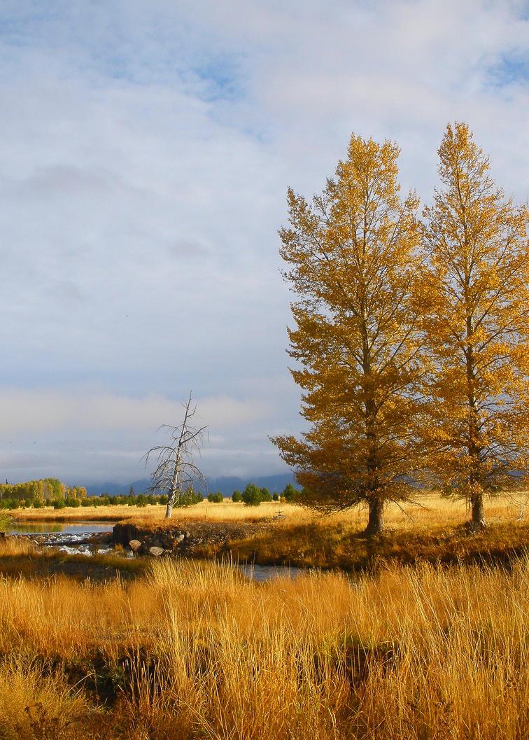 Autumn Canvas II by Thundercatt99