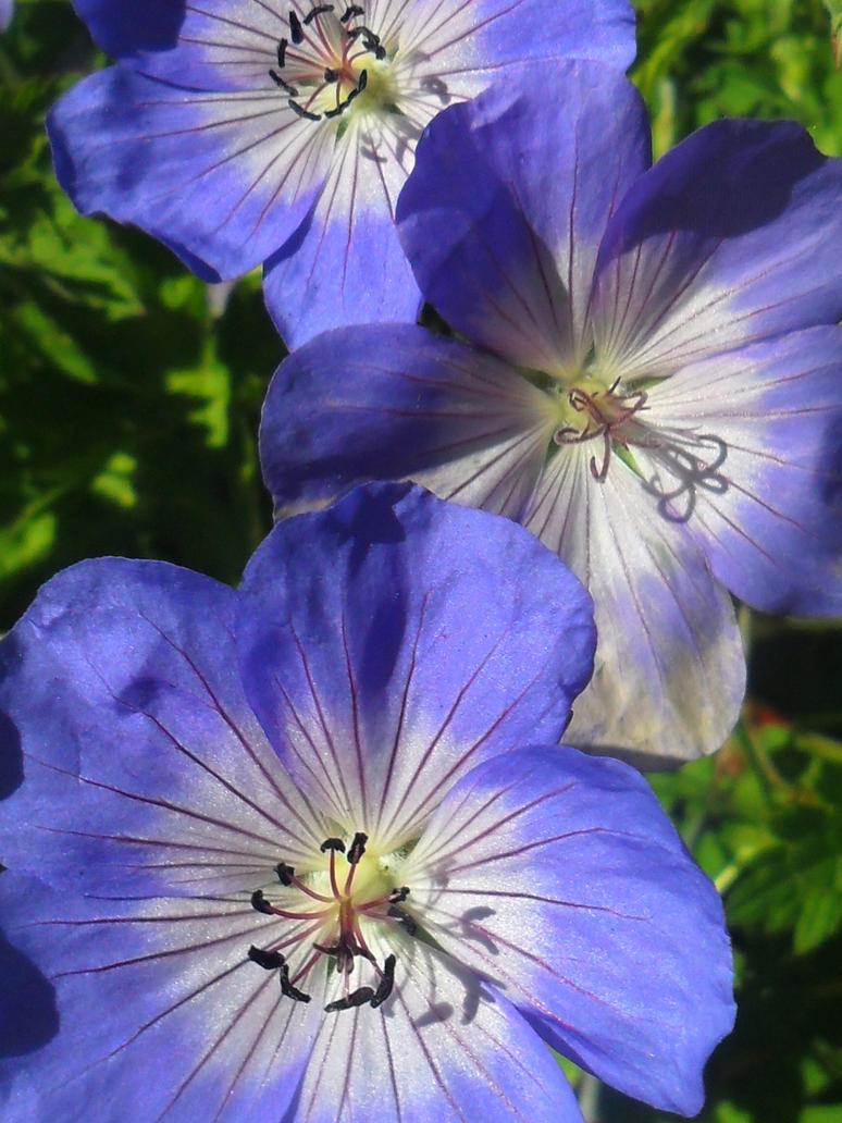 Blue Summer by Thundercatt99