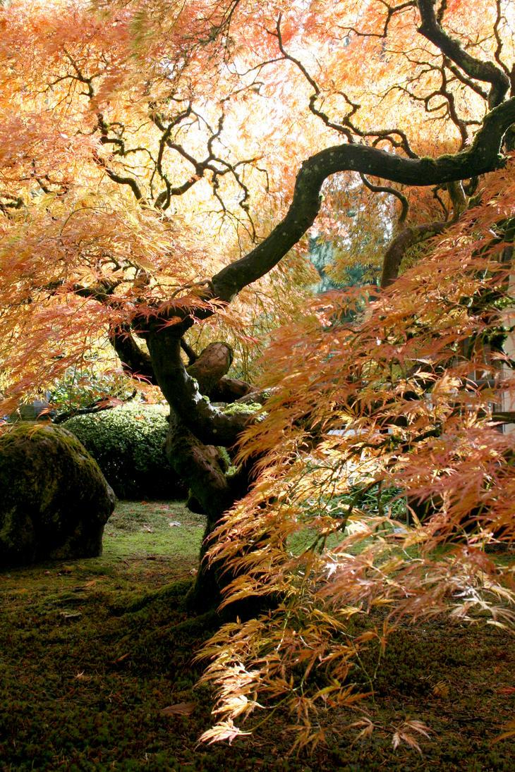 Gorgeous Autumn Colors by Thundercatt99