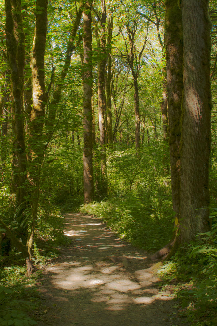 A Stroll Through The Woods by Thundercatt99