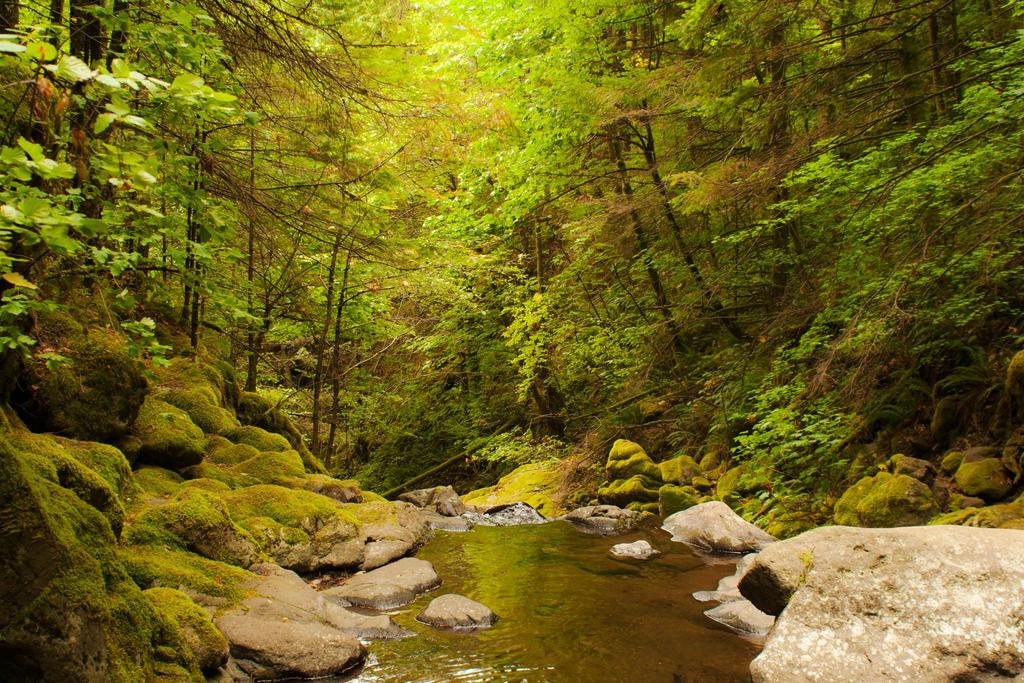 Emerald Forest by Thundercatt99