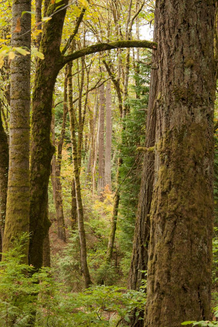 Autumn Woods by Thundercatt99