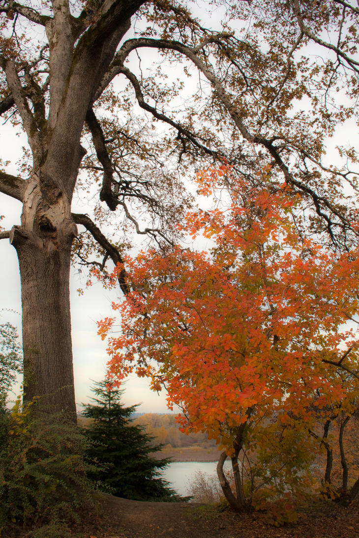 Autumn Finale by Thundercatt99