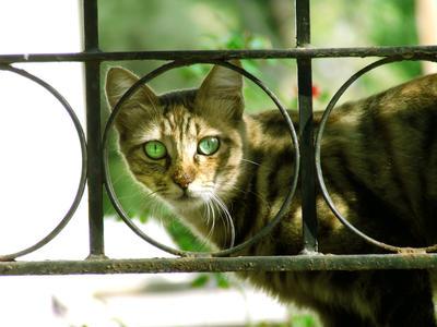 Cat 1 by batueritenel