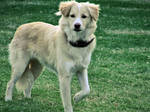 Dog by batueritenel