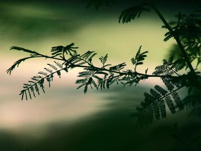 Leaf by batueritenel