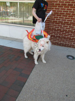 Cutest Okami Ever