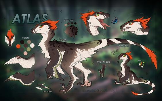 Atlas (feral)