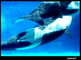 baby killer whale by JannaX