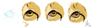 Cheetah Eye Study