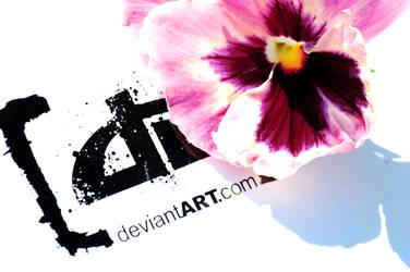 dA bloom by insaneone