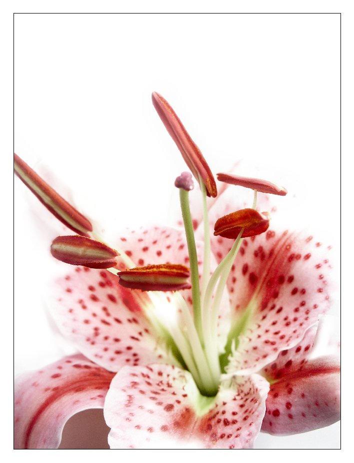 flowerworks by insaneone