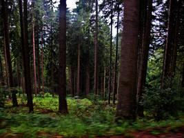 trees green nature by Molekuele