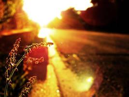 sunlight by Molekuele