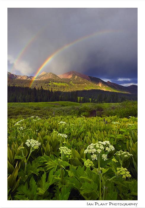 Gothic Rainbow by Ian-Plant