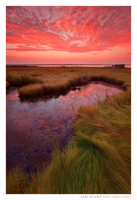 New Dawn by Ian-Plant