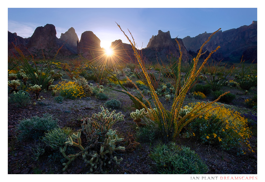 Kofa Dawn by Ian-Plant