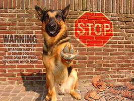 watch for the dog