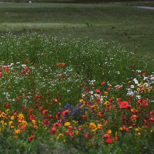 Wildflowers by BushyBashai